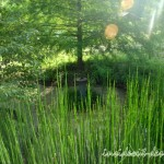 Looking over the horsetail into the garden.