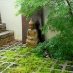 Buddha rests in front of a reclaimed steel piece and under the Japanese maple.