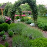 Lavender grow with boxwood and newly planted Liatris spicata, while several varieties of clematis grow over a series of three arched arbors.