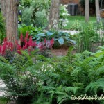 03-The woodland area is full of different textures with lady fern, hosta, astilbe, and equisetum  in the rain garden.