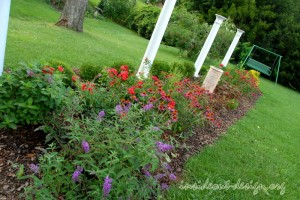 The cutting garden includes traditional favorites of the homeowner: butterfly bush, carpet roses, coneflower, daisies, and boxwoods.