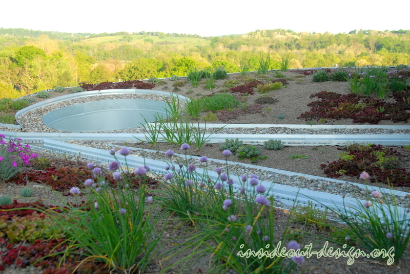 The green roof in bloom the spring 2012 following planting in early fall 2011.